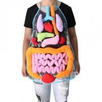 Фартух Органи людського тіла