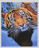 Картина за номерами + Алмазна мозаїка 2в1 YGJ 74697 (30) 50х40см